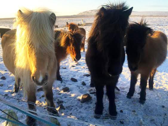horses2-2